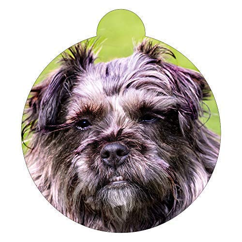 Lokipets Affenpinscher Breed Picture Pet ID tag
