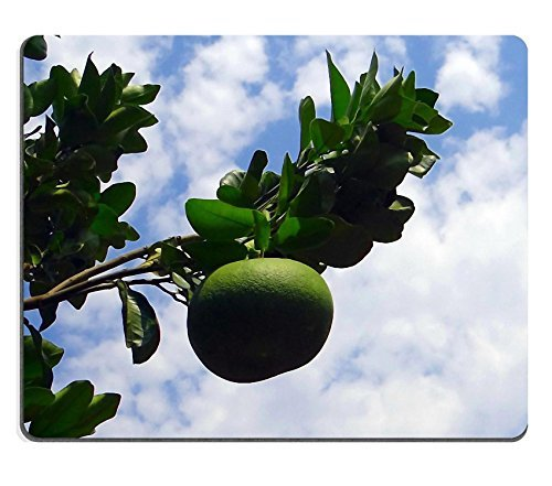 jun-xt-mousepad-bark-texture-muschio-licheni-albero-in-gomma-naturale-materiale-immagine-337405