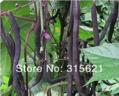 Black Gold rein haricot (Phaseolus vulgaris L) Graines jardin Santé légumes haricots Français 30 pcs