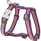 Red Dingo Dreamstream Purple Small Hundegeschirr ( Körperumfang : 36 - 54 cm )