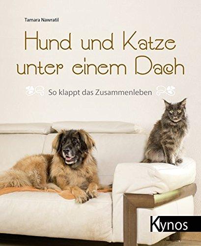 Hexe Hund - Hund und Katze unter einem Dach: