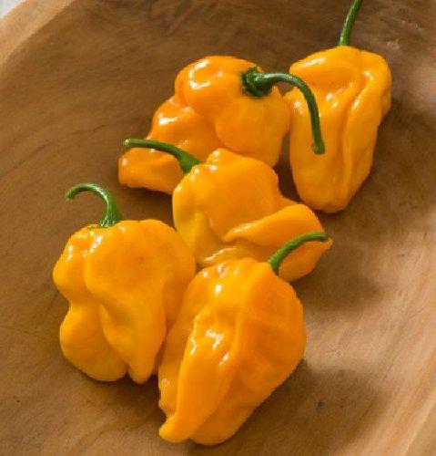 habanero-orange-numex-suave-mild-non-gmo-10-graines