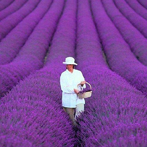 ESHOO 200 Stücke Lavendelsamen Home Garten Bonsai Herb Blumensamen -