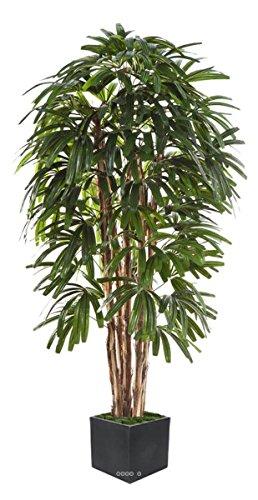Künstliche–Palme Künstlicher RAPHIS in Topf Multi Stämme H 240cm grün–dimhaut: H 240cm–Farbe: grün
