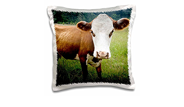 3drose Pc 148321 1 Use Washington San Juan Islands Stuart Island Cow Us48 Mfr0031 Mr Pillow Case 16 X 16 Amazon In Home Kitchen