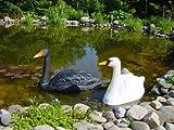 2 x Schwan XXL wunderschön für Garten Deko Teich & Brunnen Kunststoff in Schwarz und Weiss