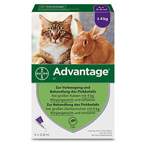 Bayer Vital GmbH Advantage 80 mg für gr.Ka 4X0.8 ml -