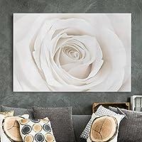 Bilderwelten Cuadro en lienzo - Pretty White Rose - Apaisado 2:3, cuadros cuadro lienzo cuadro sobre lienzo cuadro moderno cuadro decoracion cuadros decorativos cuadro xxl, Tamaño: 60 x 90cm