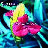 50pcs vendita calda Tillandsia Cyanea Semi in vaso semi di fiore viola Decorazione Bonsai cinese raro Per la casa e giardino