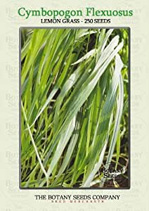 Cymbopogon Flexuosus (250) Graines - Citronnelle Semences [Lemon Grass]