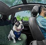 LOHUA Auto Sicherheitsgeschirr ,Auto-Sicherheits-Hundegeschirr, justierbares , Medium