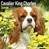 CAVALIER KING CHARLES 2016 Wall Calendar