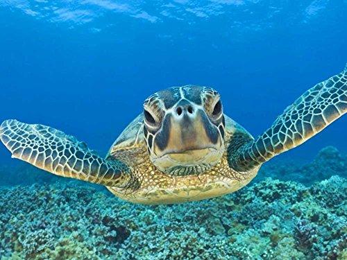 tslook Lederschildkröte in Ocean Home Welcome Fußmatte Teppich, Polyester, 30