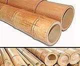 Bambusstange 300cm gelbbraun Durch. 12,0 bis 14cm, Moso Natur hitzebehandelt - Bambus Bambus Rohr Bambus Latten farbige Bambusrohre Bamboo Bambus Halbschale Bambusstangen --> großes Sortiment an Bambusrohre und Rohre aus Bambus Bambus-Rohre