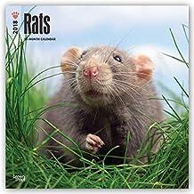 Rats 2018 Calendar