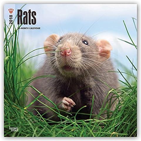 Rats - Ratten 2018 - 18-Monatskalender: Original BrownTrout-Kalender [Mehrsprachig] [Kalender] (Wall-Kalender)