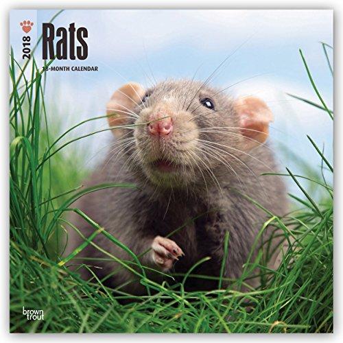 Descargar Libro Rats - Ratten 2018 - 18-Monatskalender: Original BrownTrout-Kalender de Browntrout Publishers