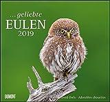 ... geliebte Eulen 2019 - DuMont Wandkalender - mit den wichtigsten Feiertagen - Format 38,0 x 35,5 cm