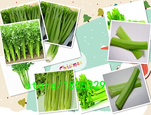 graines de céleri, graines de persil, graines de légumes - 100 particules