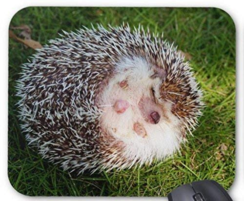 Drempad Gaming Mauspads Custom, Mouse Pad Porcupine Mousepad Computer Accessories Gaming Mouse Mat 11.8 X 9.8 Inch - Porcupine Kissen