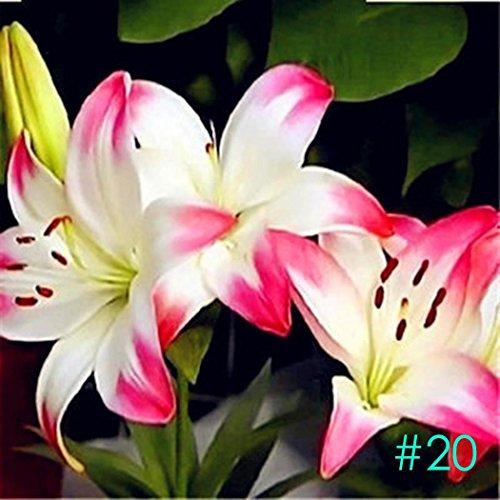 Home Garden balcon Parfum Lily avec bourgeons Vert plantes en pot Fleur Seeds-50 pcs/lot 50 PCS #20