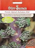 Flower-Sprout, Brassica oleracea var. Gemminfera