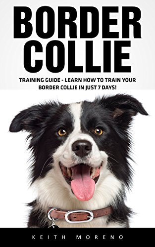 border-collie-training-guide-learn-how-to-train-your-border-collie-in-just-7-days-dog-training-guide