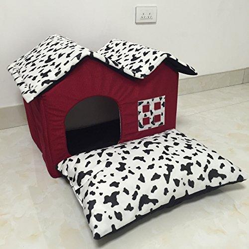 Haus Haustier Haustiere roten britischen Doppel Top Kuh Schmierblutungen ein Haus Katzenstreu
