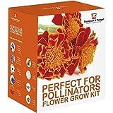 Perfetto per Pollinators Semi Kit Regalo – 5 Ape Friendly Floreali Fiori To Grow ; Verbena Bonariensis,Foxglove,Calendula,Fiordaliso & Marigold Semi By Thompson & Morgan