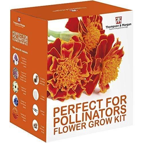 Perfecto para Pollinators Seed Kit Crecimiento Caja Regalo – 5 Amigable con Floreciente Flores a Crecer; Verbena Bonariensis,Dedalera,Calendula,Aciano y Caléndula Semillas por Thompson&Morgan