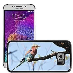 Bild Hart Handy Schwarz Schutz Case Cover Schale Etui // M00109192 Lila Breasted Rolle Vogel // Samsung Galaxy S6 EDGE (Not Fits S6)
