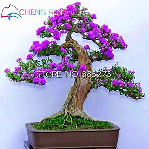 pinkdose top vendita dei 50 pc colori sgargianti delle bouganville spectabilis willd piante bonsai piante piante da fiore perenni giardino fiori rari pot: blu