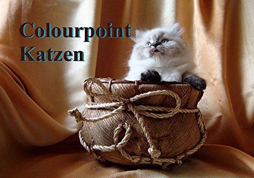 Colourpoint Katzen (tischaufsteller DIN A5quer)
