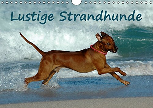 Lustige Strandhunde (Wandkalender 2019 DIN A4 quer): Hundespass am Strand (Monatskalender, 14 Seiten ) (CALVENDO Tiere) -