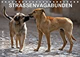 STRASSENVAGABUNDEN (Tischkalender 2019 DIN A5 quer): Straßenhunde in Ecuador (Monatskalender, 14 Seiten ) (CALVENDO Orte)