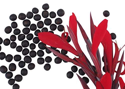 Canna - Indisches Blumenrohr \'Canna indica\' 10 Samen