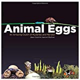 Animal Eggs: An Amazing Clutch of Mysteries and Marvels by Dawn Cusick (2011-02-01)