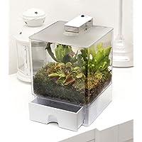 plantes carnivores plantes carnivores plantes d 39 int rieur jardin. Black Bedroom Furniture Sets. Home Design Ideas