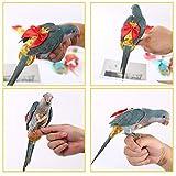 Bouder Pañales Parrots con diseño de pájaros para bugeriga, Varios diseños de maestría de pájaros