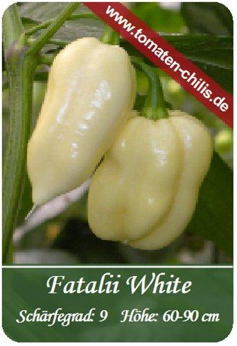 Chili Samen - 15 Stück - Fatalii White