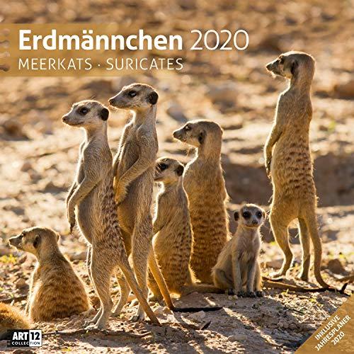 Erdmännchen 2020