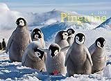 Pinguine 2020, Wandkalender im Querformat (45x33 cm) - Tierkalender mit Monatskalendarium