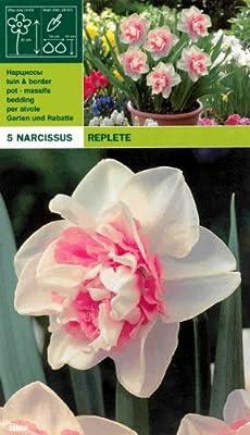 """Narcissus - Gefüllte Narzisse """" REPLETE """" (5) von MOSSELMAN bei Du und dein Garten"""