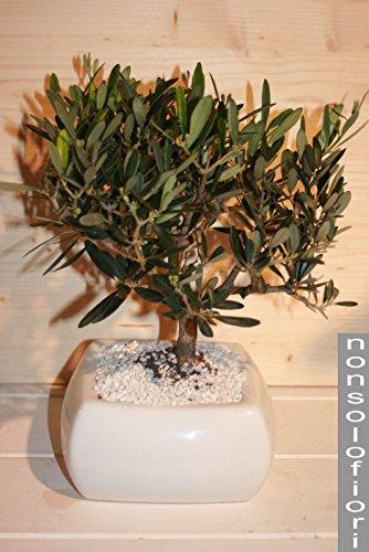 Nonsolofiori addobbi matrimonio vaso ceramica con bonsai for Bonsai di ulivo