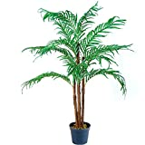 PLANTASIA® Kokos-Palme