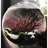 """Miniature Marimo Aquarium - 10CM Footed Glass Orb Vase with 3 Japanese Moss Balls Obsidian Pebbles Coral Branch and Shells DIY Gift for Home or Office (with 3 x 10mm marimo, 4""""(Diameter))"""