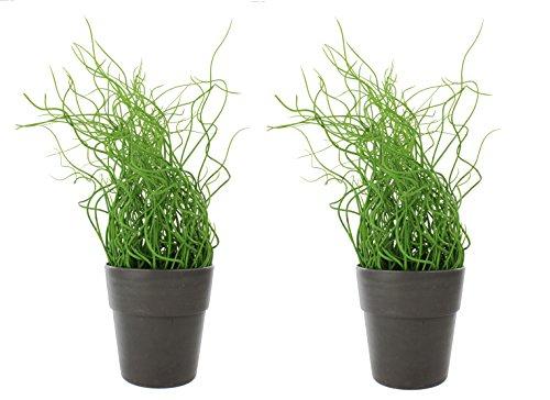 artfleur - 2er Set künstliche Korkenzieher Liebeslocken 30cm Grünpflanze Kunstpflanze Topfpflanze