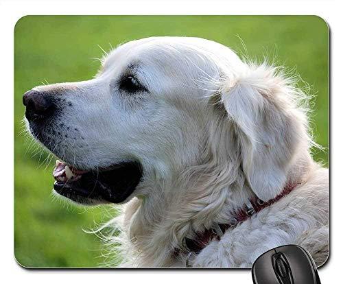 Mauspads - Retriever Canine Pet Animal Weißer Hundepelz