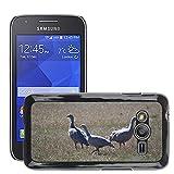 Grand Phone Cases Bild Hart Handy Schwarz Schutz Case Cover Schale Etui // M00141005 Cape Barren Gänse Gänse Tier // Samsung Galaxy Ace4 / Galaxy Ace 4 LTE / SM-G313F