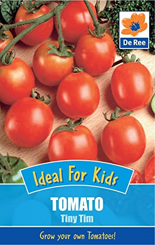 2-packs-of-tomato-tiny-tim-seeds-ideal-for-kids-approximately-35-seeds-per-pack-70-in-total